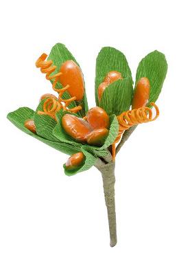 Magnolia Arancio